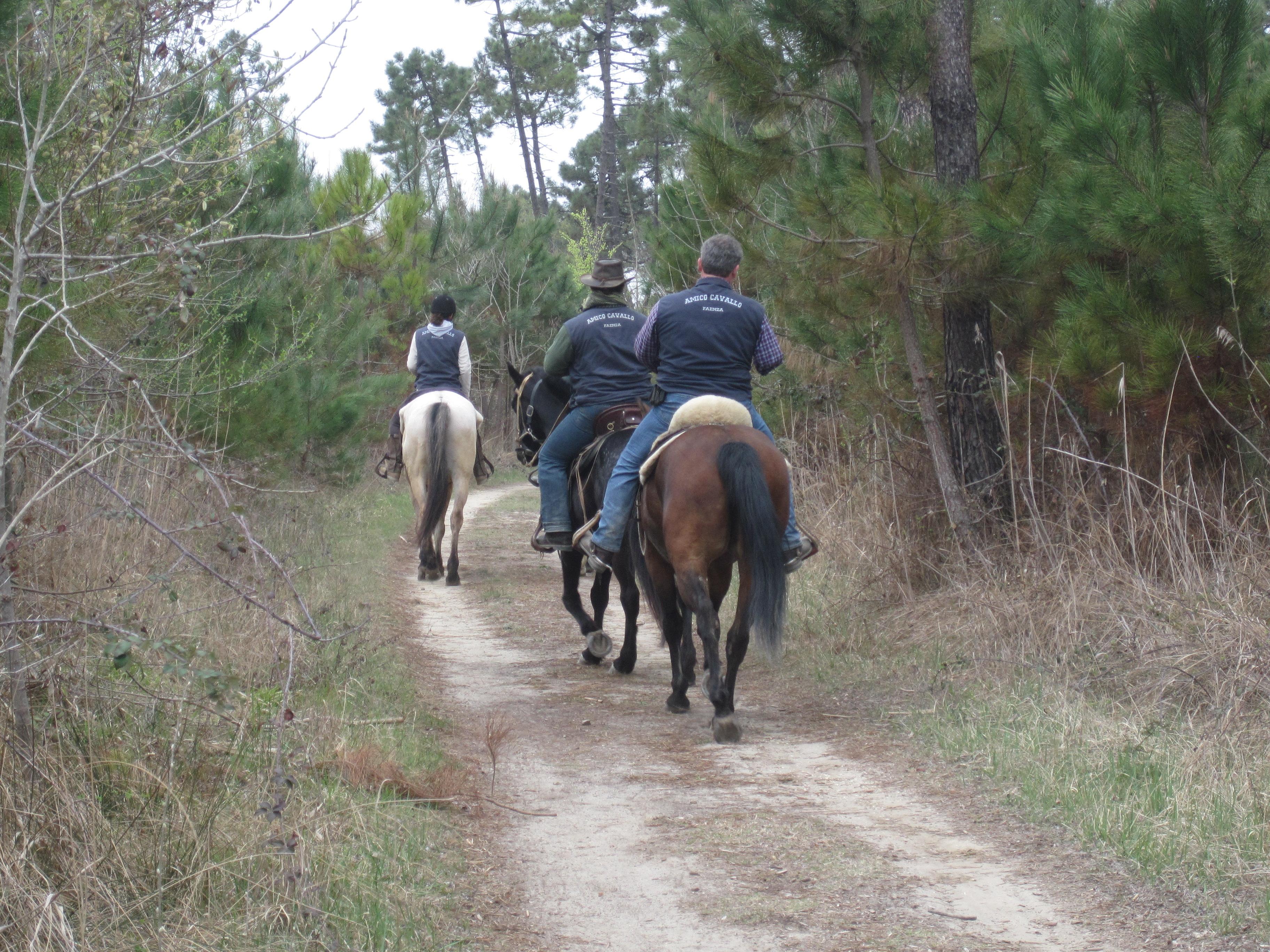 Una suggestiva passeggiata a cavallo vicino Brescia