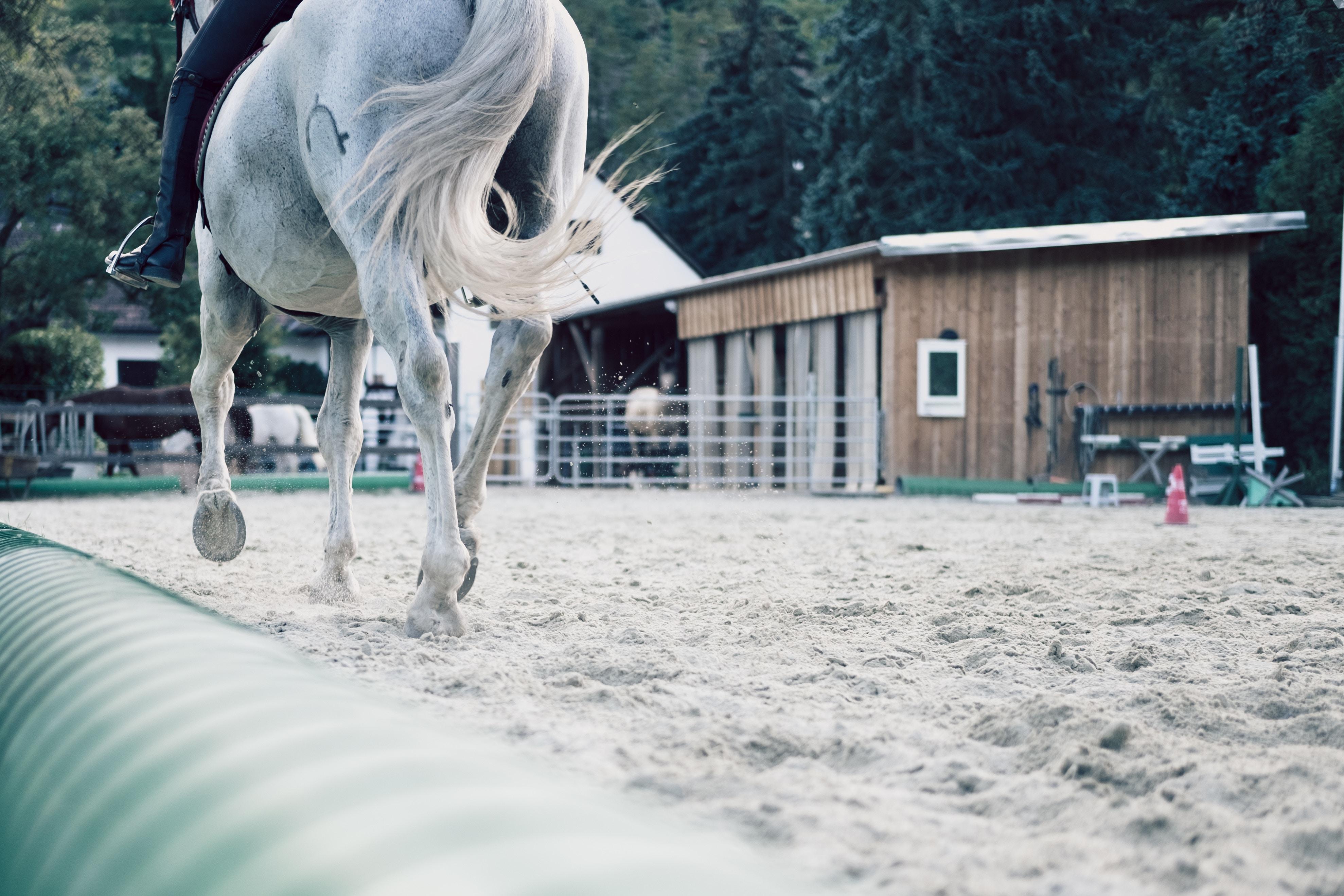 Impara ad andare a cavallo nel cuore della Franciacorta